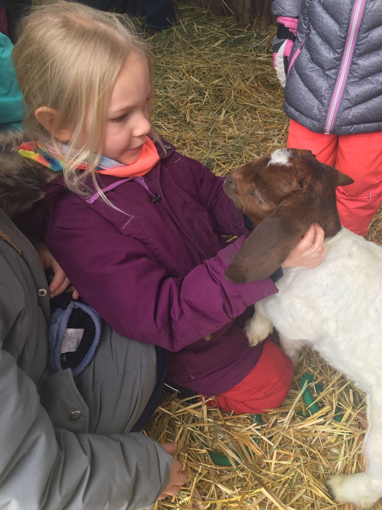 kindy goats